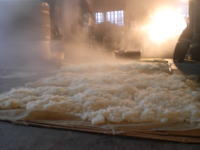 蒸し上がったばかりの酒米を、仕込み温度まで冷やしています