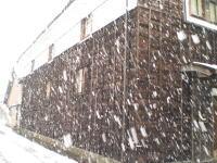 例年になく、今年は雪が降っています。
